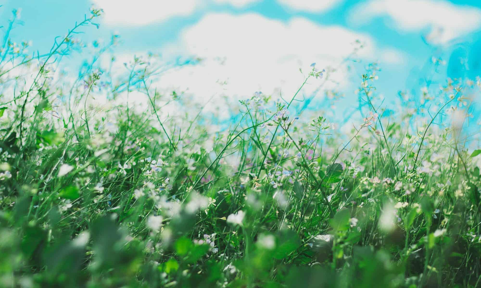 flowers that cause seasonal allergies